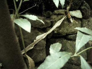 snake2007.jpg